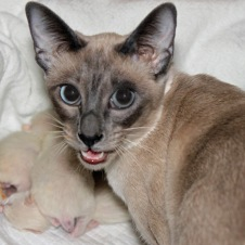 Proud new mama, Felicia, watching over her five new kittens.