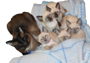 02/12/2014 - Katsumoto with his kittens