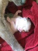 Jazmine's baby