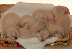 5/5/2014 Felicia's second litter