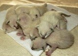 5/5/2014 Felicia's second litter