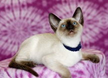 SOLD - Felicia's second litter 7/7/14