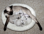 Andie and kittens at 3 weeks - 9/18/2014